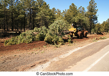 skidder drags a tree - a wheeled skidder drags a pine tree...