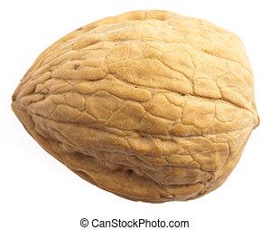 walnut - single walnut isolated on a white background