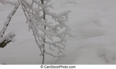 Winter weather - Branch of a tree, all covered ice