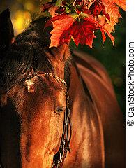 sleeping bay horse