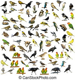 81, fotografias, Pássaros, isolado