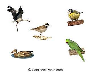 Birds isolated on white - Blue Tit Rose-ringed parakeet...