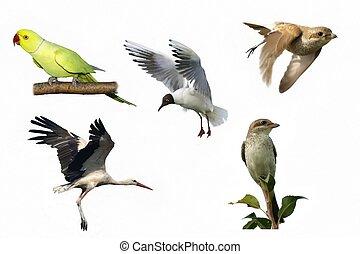 birds isolated