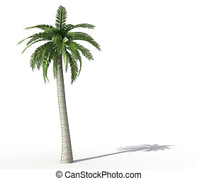 palm tree isolated on white - rendering