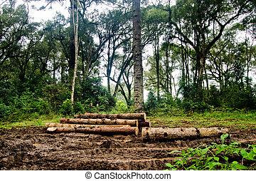 troncos, barro