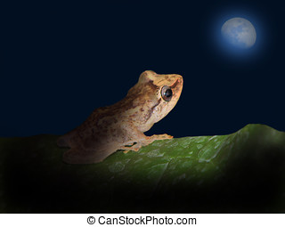 Coqui and the moon - Coqui frog and crescent moon,Coqui frog...
