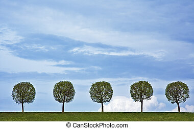 5 trees - background of 5 trees and blue sky