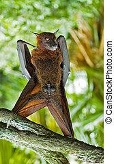 bat(man)