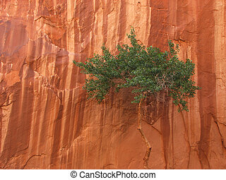 canyon tree - A lone desert tree canopy against a streaked...