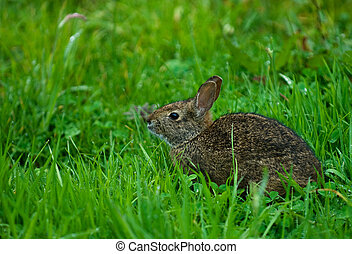 hare in green grass