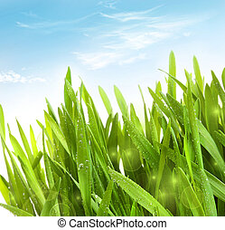 Fresh wheat grass with dew drops against blue sky