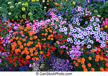 flower bed - colorful flower bed background