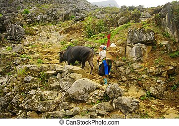 Hmong woman returning from the fiel - Hmong woman returning...