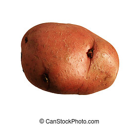isolated red potato - red or new potato isolated on white...