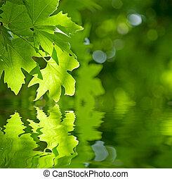 離開, 淺, 集中, 反射, 綠色, 水
