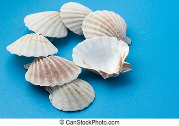 white seashell on blue