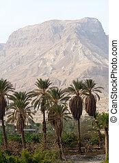 Ein Gedi -Israel - Ein Gedi oase near the Dead Sea - Israel