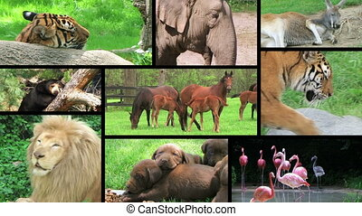Animal Composite - Wildlife montage.