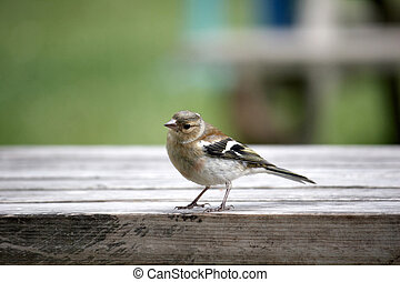 Little bird - A little bird perched on a table in a park