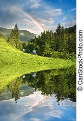 regnbåge, över, skog