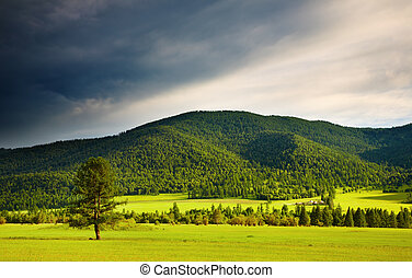 Mountain landscape - Landscape with forest and cloudy sky