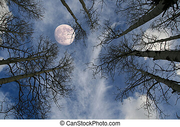 moon behind tree - view up at a nearly full moon behind bare...