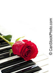 rose and piano - red rose on piano keyboard