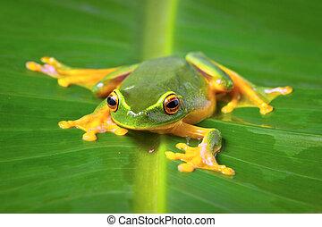 Beautiful green frog sitting on leaf