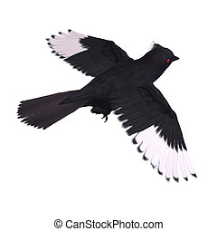 Bird Phainopepla. 3D rendering with clipping path and shadow over white