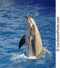 Bottlenose dolphin - Portrait of the dolphin who has been...