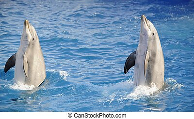 Bottlenose dolphins - Portrait of the dolphins, who has been...