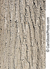 Bark texture for background usage