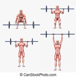 weight lifting excercises - Various weight lifting postures...