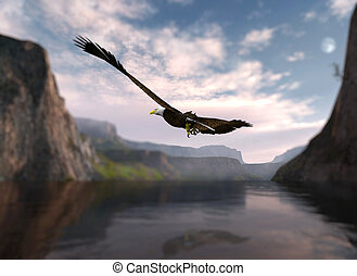 Eagle soaring over water. - Eagle soaring over the water and...