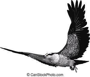 Osprey Bird vector - An illustration of a Osprey bird,...