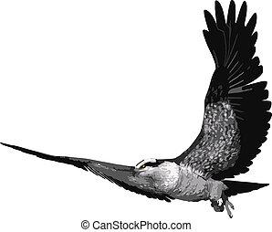 Osprey Bird vector