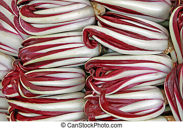 bitter red italian radicchio chicory from Treviso for sale...