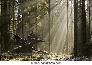 Forest creature - Sunlight shining through the trees....
