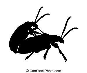 Beetles in copulation