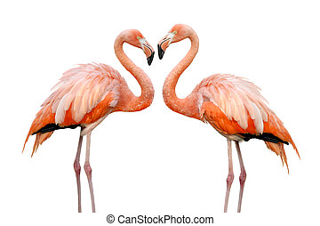 Two beautiful flamingos in love - Two colorful flamingos...