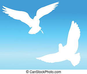 The pigeon and sky - Silhouette of the white pigeon on a...