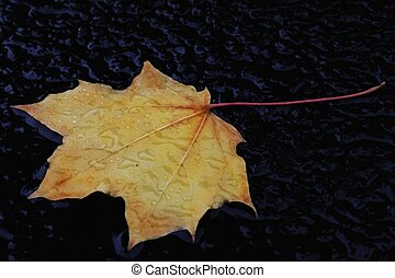 One leaf - One wet leaf