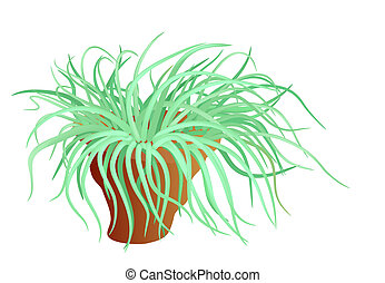 sea anemone - vector - Illustration of the sea anemone -...