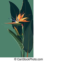 Bird of paradise flower - Strelitzia, Bird Of Paradise...