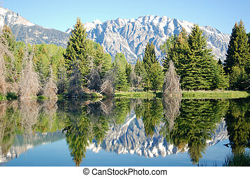 Schwabacher's Landing - Mt Moran and the Teton Mountain...