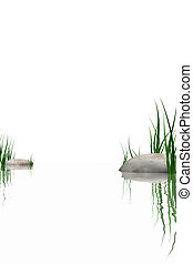 Stones & grass at waters edge isolated on white