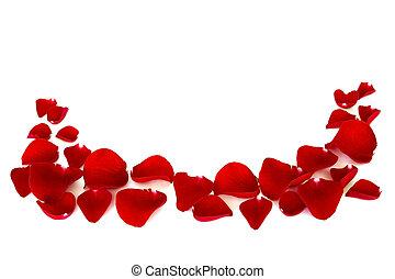 rose petals - red rose petals