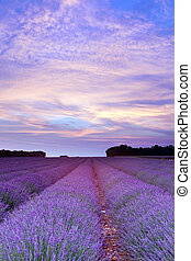 Provence, lavanda, pôr do sol