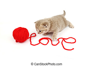 love cat - cat and wool sign love