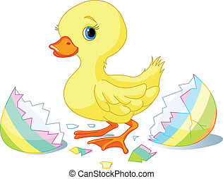 Easter surprise - Easter duckling jumping out from broken...
